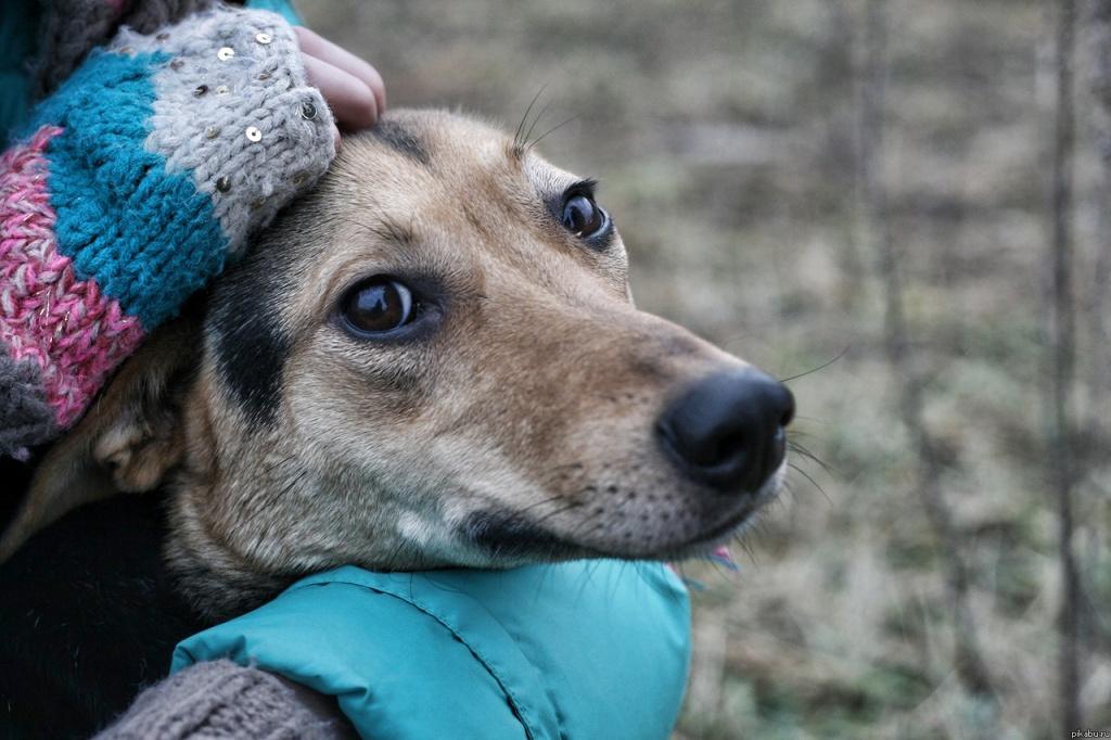 Ветстанция Караганды прокомментировала информацию об «обстреле» животных