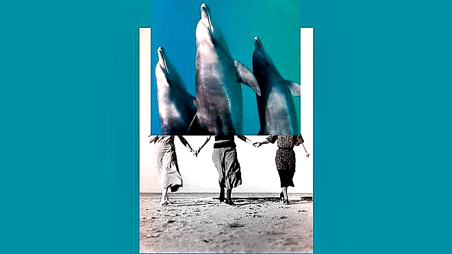 Сверхспособности: Все мы немного… дельфины