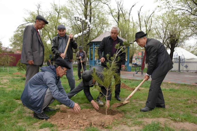 В Туркестане появится 10.000 быстрорастущих деревьев