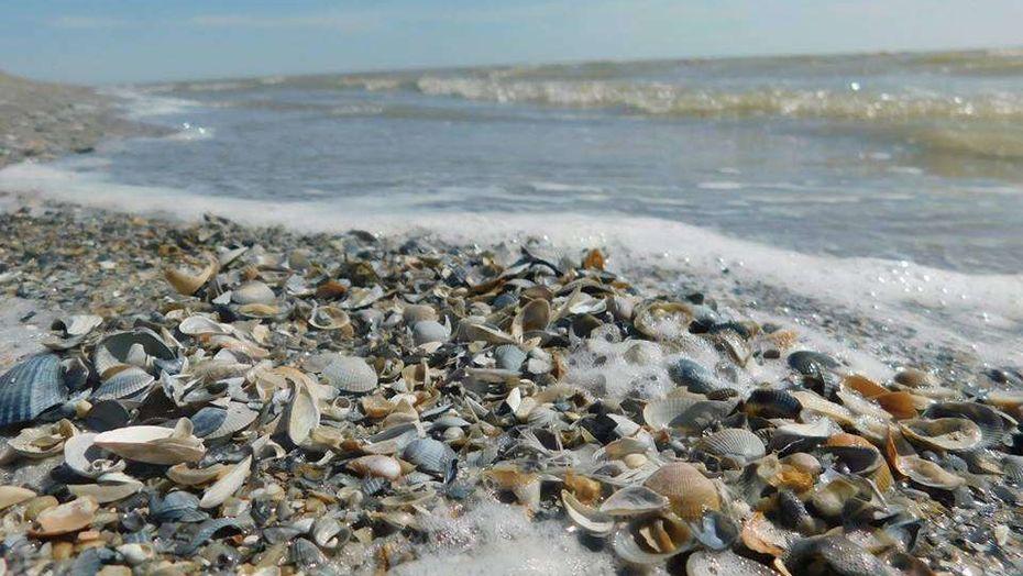 Специалисты исследуют причины гибели моллюсков на Урале