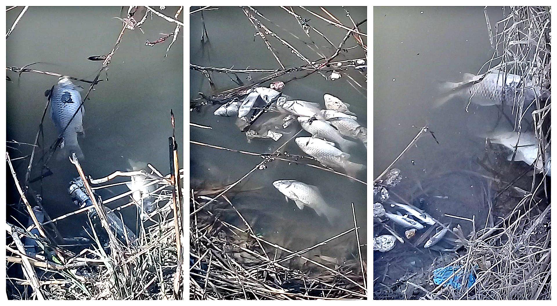 Пруд в Алматинской области, в котором погибли 2 тонны рыбы, очищен