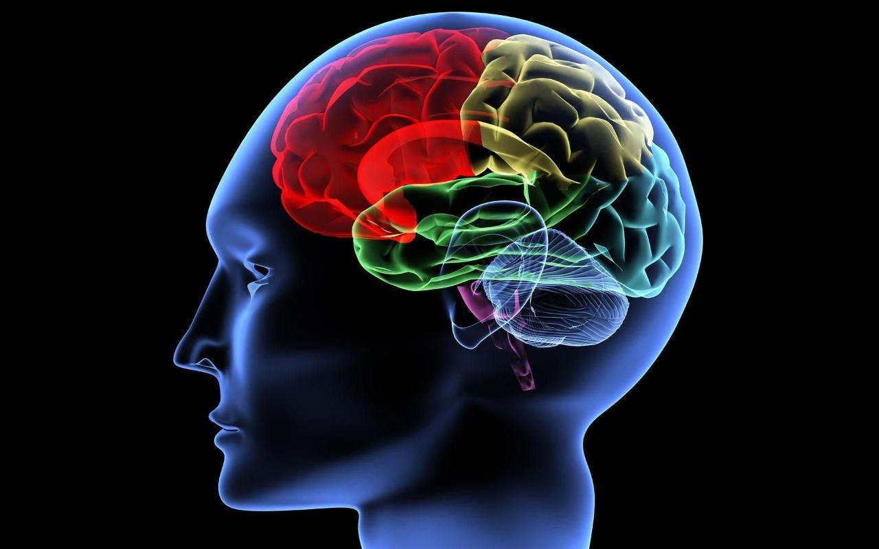 Насколько безграничны возможности нашей памяти?