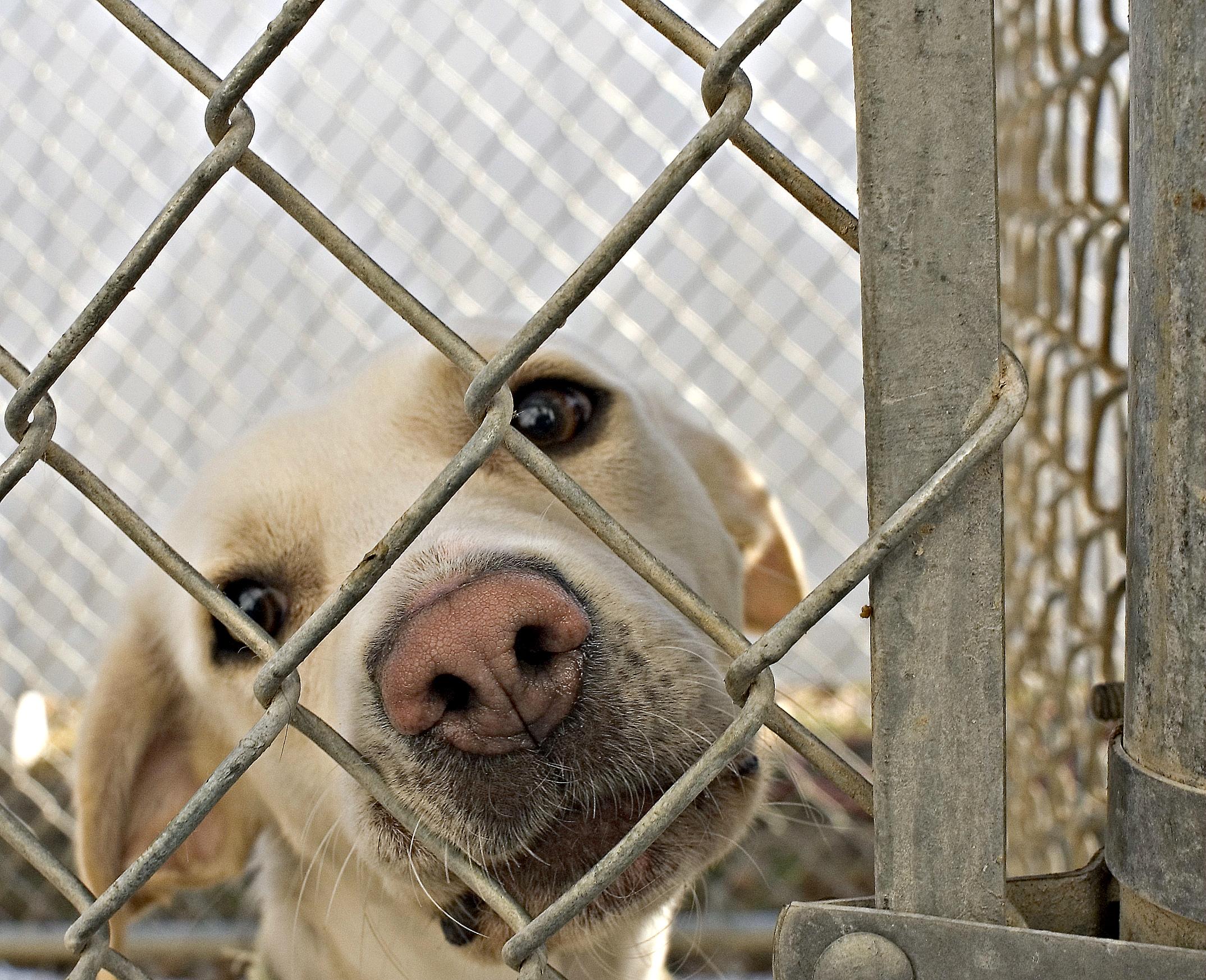 Уральские чиновники предложили отпускать бродячих животных после стерилизации
